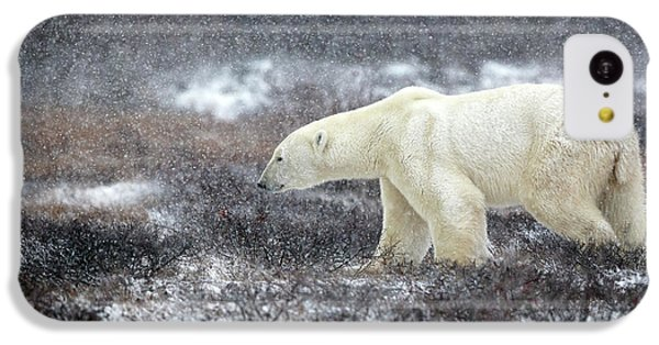 Polar Bear iPhone 5c Case - Snowing Time by Alessandro Catta