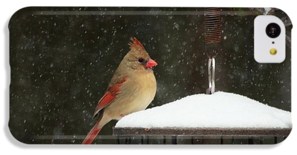 Snowy Cardinal IPhone 5c Case by Benanne Stiens