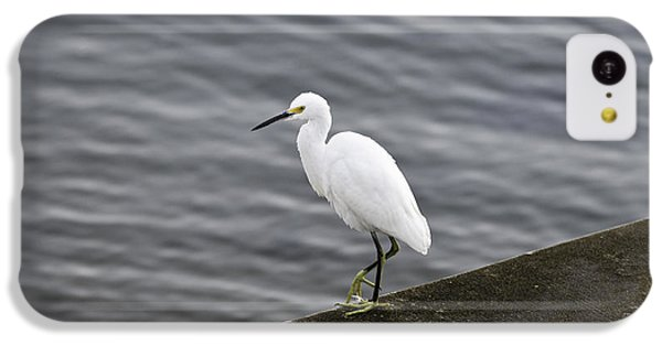 Snowy Egret IPhone 5c Case by Anthony Baatz