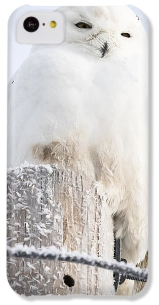 Snowy Owl IPhone 5c Case