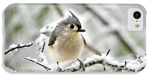 Snowy Tufted Titmouse IPhone 5c Case by Christina Rollo