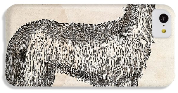Llama iPhone 5c Case - South American Camelid by Middle Temple Library