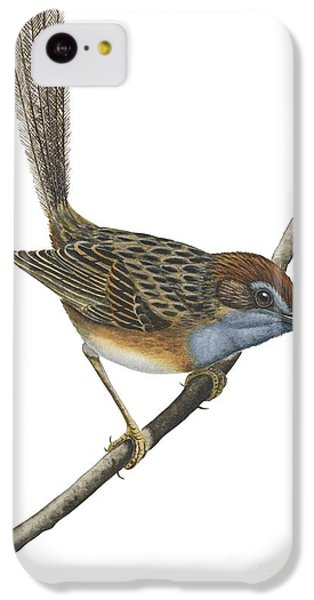 Southern Emu Wren IPhone 5c Case by Anonymous