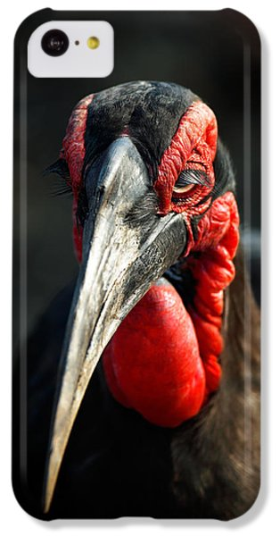 Southern Ground Hornbill Portrait Front View IPhone 5c Case by Johan Swanepoel