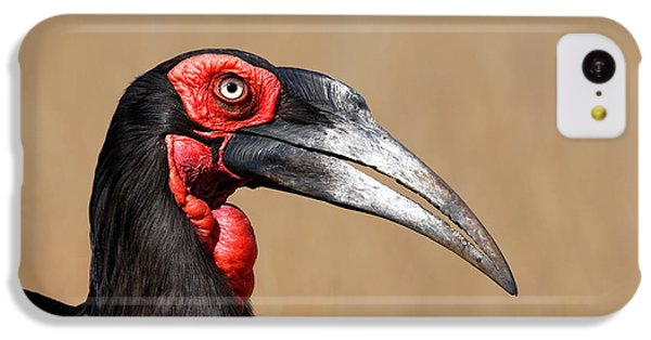 Hornbill iPhone 5c Case - Southern Ground Hornbill Portrait Side View by Johan Swanepoel