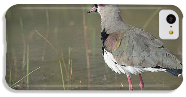 Southern Lapwing In Marshland Pantanal IPhone 5c Case by Tui De Roy