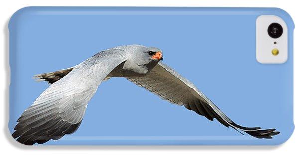 Hawk iPhone 5c Case - Southern Pale Chanting Goshawk In Flight by Johan Swanepoel