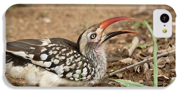 Hornbill iPhone 5c Case - Southern Red-billed Hornbill by Bob Gibbons