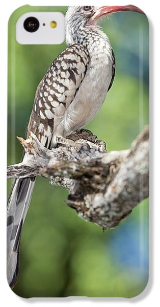 Southern Red-billed Hornbill IPhone 5c Case