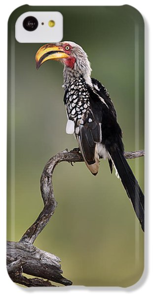 Hornbill iPhone 5c Case - Southern Yellowbilled Hornbill by Johan Swanepoel