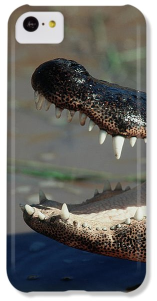 Southwestern United States, American IPhone 5c Case