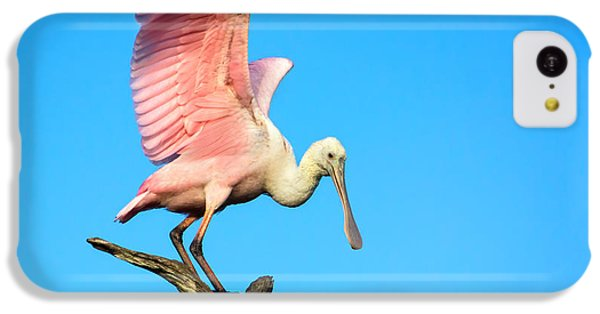 Spoonbill Flight IPhone 5c Case by Mark Andrew Thomas