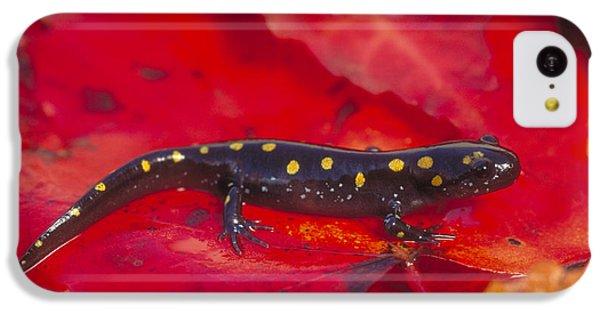 Spotted Salamander IPhone 5c Case by Paul J. Fusco