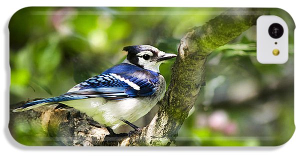 Spring Blue Jay IPhone 5c Case
