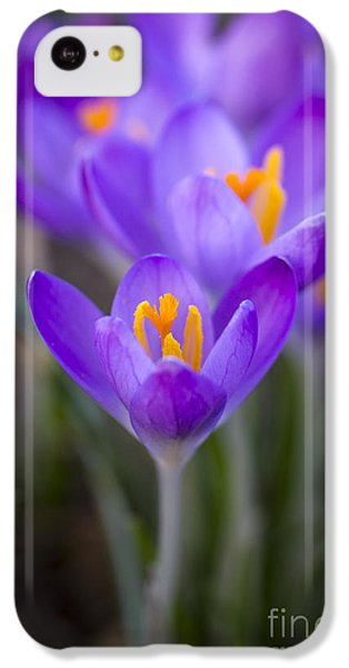 Spring Has Sprung IPhone 5c Case