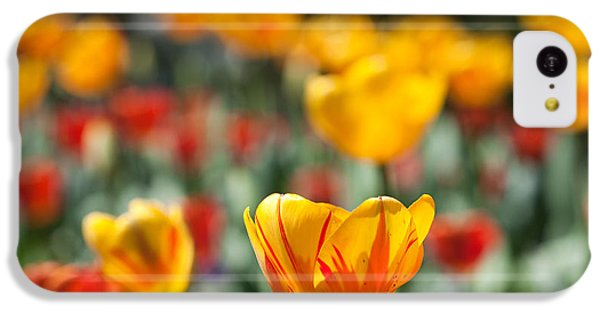 IPhone 5c Case featuring the photograph Spring Is Upon Us by Nathan Rupert