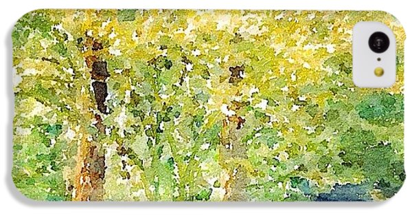 Sunny iPhone 5c Case - Spring Maples by Anna Porter