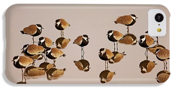 Spur-winged Lapwing (vanellus Spinosus) IPhone 5c Case