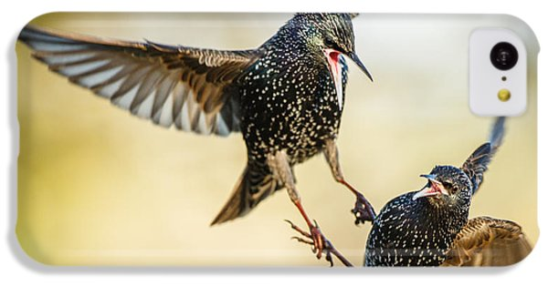 Starling Aerial Battle IPhone 5c Case by Izzy Standbridge