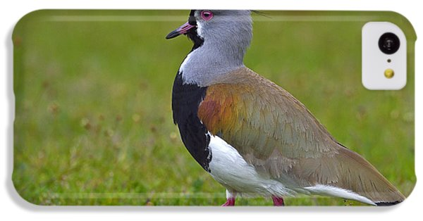 Strutting Lapwing IPhone 5c Case