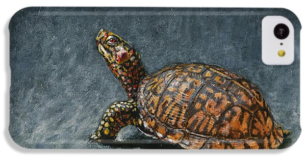 Study Of An Eastern Box Turtle IPhone 5c Case by Rob Dreyer