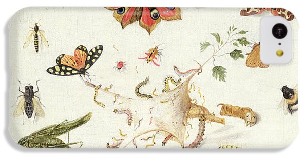 Grasshopper iPhone 5c Case - Study Of Insects And Flowers by Ferdinand van Kessel