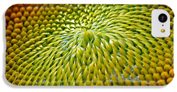 Sunflower iPhone 5c Case - Sunflower  by Christina Rollo