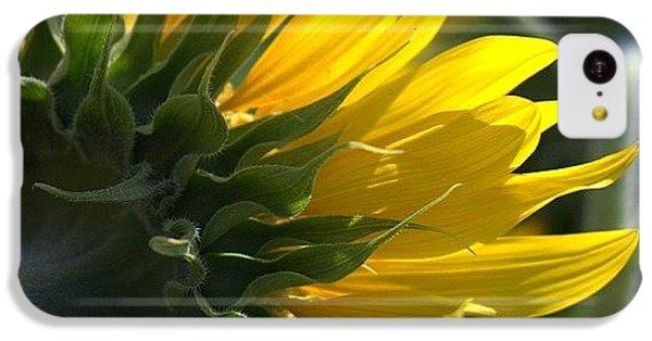 Colorful iPhone 5c Case - #sunflower #closeup by Georgia Fowler