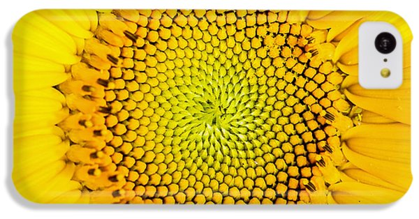 Sunflower iPhone 5c Case - Sunflower  by Edward Fielding
