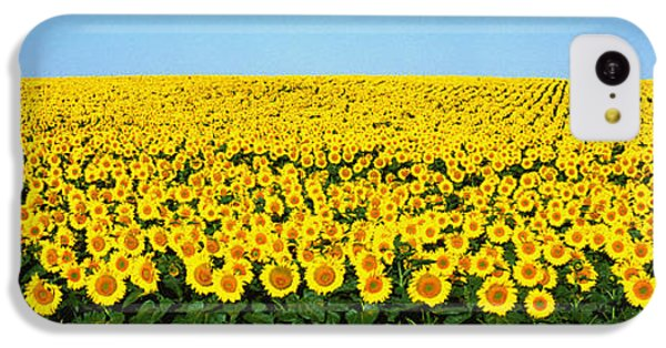 Sunflower iPhone 5c Case - Sunflower Field, North Dakota, Usa by Panoramic Images