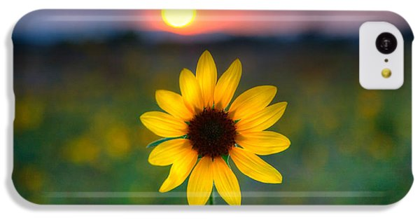 Sunflower iPhone 5c Case - Sunflower Sunset by Peter Tellone