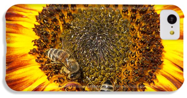 Sunflower With Bees IPhone 5c Case