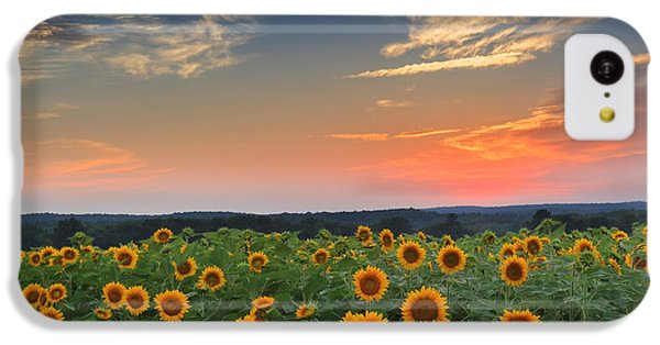 Sunflowers In The Evening IPhone 5c Case