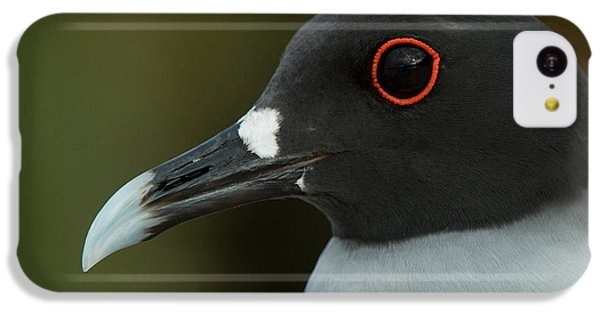 Swallow-tailed Gull (larus Furcatus IPhone 5c Case by Pete Oxford