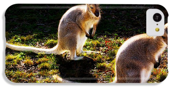 Swamp Wallabies IPhone 5c Case by Miroslava Jurcik