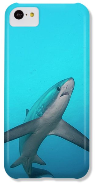Sharks iPhone 5c Case - Swimming Thresher Shark by Scubazoo