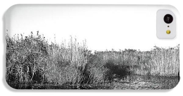Anhinga iPhone 5c Case - Tall Grass At The Lakeside, Anhinga by Panoramic Images