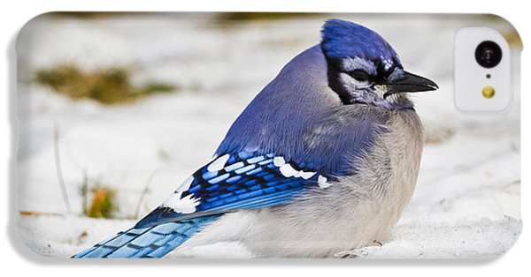 The Bluejay IPhone 5c Case