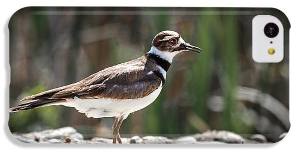 Killdeer iPhone 5c Case - The Killdeer by Robert Bales