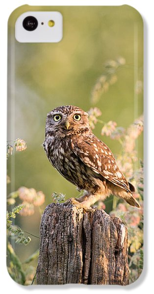 The Little Owl IPhone 5c Case