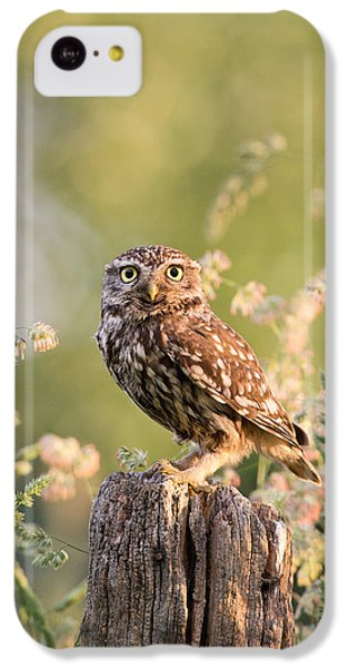 The Little Owl IPhone 5c Case by Roeselien Raimond