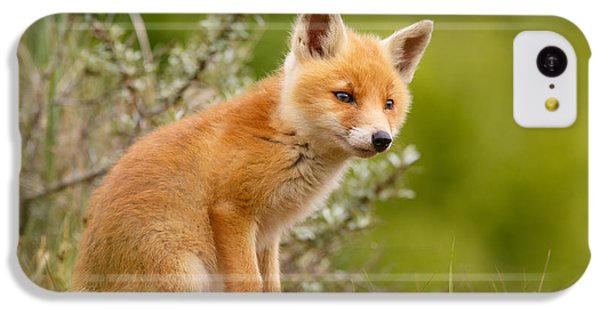 The New Kit ...curious Red Fox Cub IPhone 5c Case