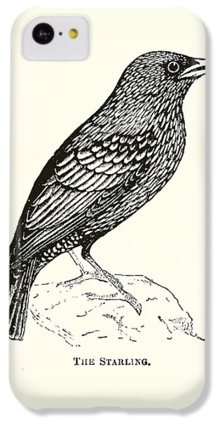 The Starling IPhone 5c Case by English School