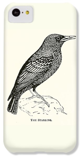 Starlings iPhone 5c Case - The Starling by English School