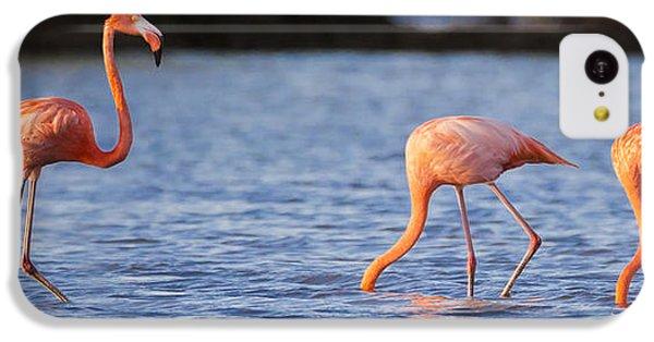 Flamingo iPhone 5c Case - The Three Flamingos by Adam Romanowicz