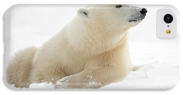 Polar Bear iPhone 5c Case - There's Something In The Air by Marco Pozzi