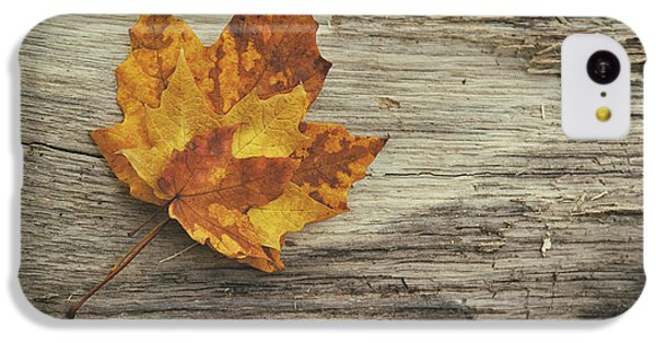 Three Leaves IPhone 5c Case by Scott Norris
