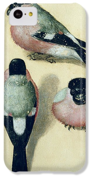 Three Studies Of A Bullfinch IPhone 5c Case by Albrecht Durer