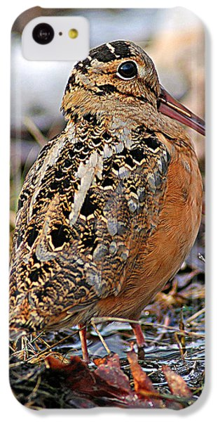 Timberdoodle The American Woodcock IPhone 5c Case