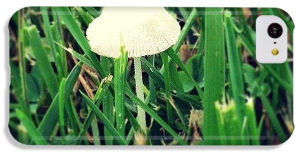Tiny Mushroom In Grass #mushroom #grass IPhone 5c Case
